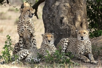 Phinda Game Reserve - full day
